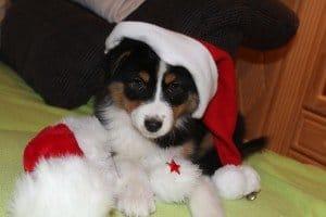 Weihnacht_Betty_CelinaWeis