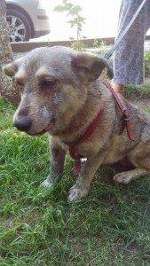 Lily noch im Shelter in Rumänien