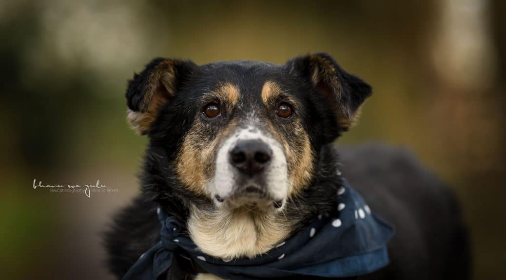 hunde mit pflegestelle in nrw