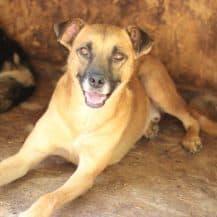 """<strong>Zabou</strong><br><span style=""""font-size: 70%;""""> 55 cm – ein toller Name für einen tollen Hund</span>"""